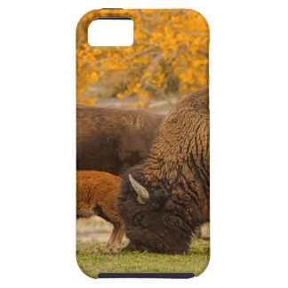 Bison Family Nation Case For The iPhone 5