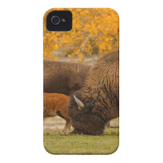 Bison Family Nation Case-Mate iPhone 4 Case