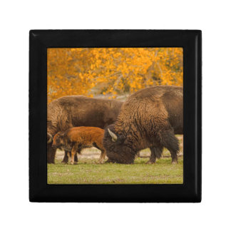 Bison Family Nation Gift Box