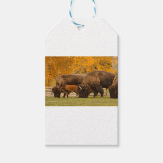 Bison Family Nation Gift Tags