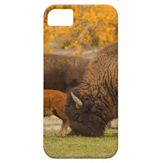 Bison Family Nation iPhone 5 Cover