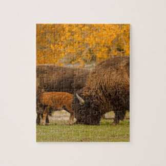 Bison Family Nation Jigsaw Puzzle