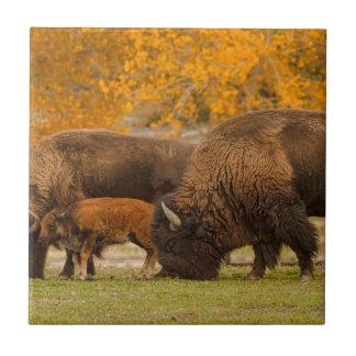 Bison Family Nation Tile