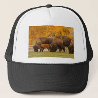 Bison Family Nation Trucker Hat