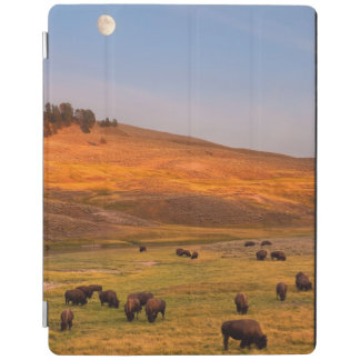 Bison Grazing on Hill at Hayden Valley iPad Cover