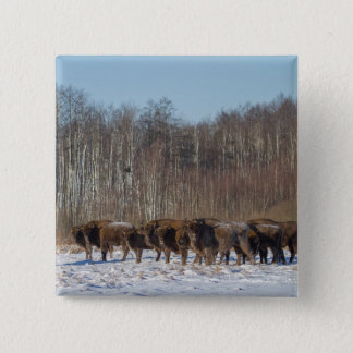 Bison Herd 2 Inch Square Button
