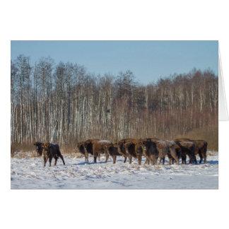 Bison Herd Card