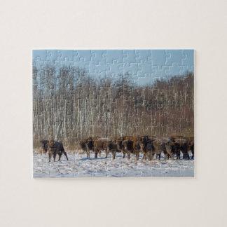 Bison Herd Puzzles