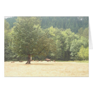 Bison in a field card