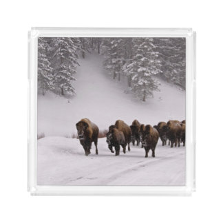 Bison in Winter Acrylic Tray