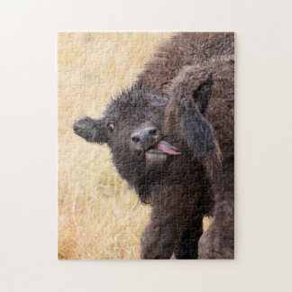 bison jigsaw puzzle