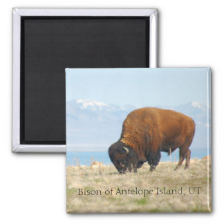 Bison of Antelope Island, UT Magnet