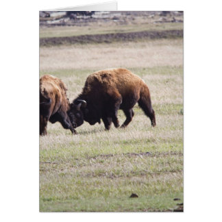 Bisons Play Fighting Card