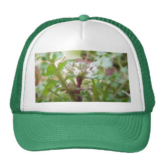 Bittercress (Cardamine hirsuta) Flower and Leaves Trucker Hat
