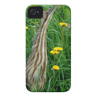 Bittern, northern Ontario water bird iPhone 4 Covers
