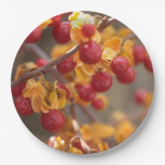 Bittersweet Berries Paper Plates