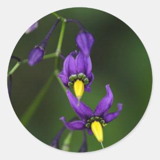 Bittersweet nightshade (Solanum dulcamara) Classic Round Sticker