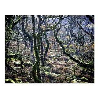 Black a Tor Copse, Dartmoor, Devon, United Postcard