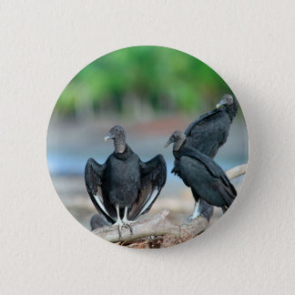 Black American vultures Panama coast 2 Inch Round Button
