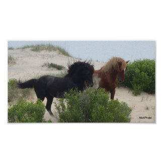Black and Brown Wild Corolla Horses Poster