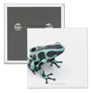black and green poison dart frog (dendrobates 2 inch square button