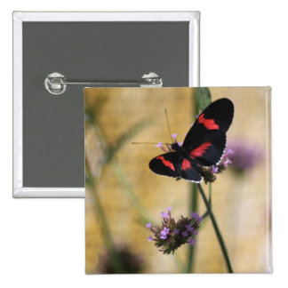 Black  and Red Butterfly Button