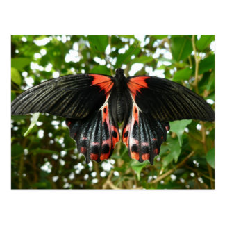 Black and red moth postcard
