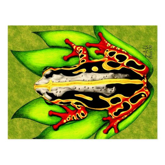 Black and Red Tree Frog Postcard