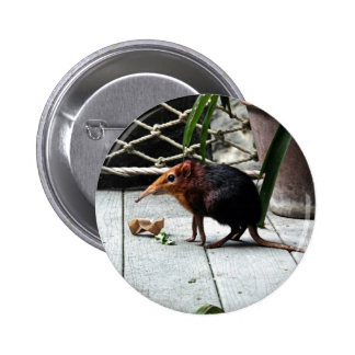 Black and Rufous Elephant Shrew 2 Inch Round Button