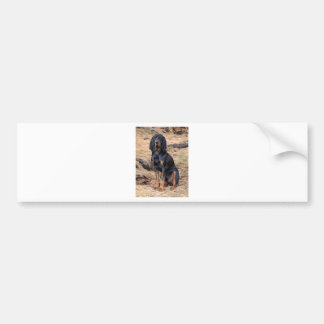 Black and Tan Coonhound Dog Bumper Sticker