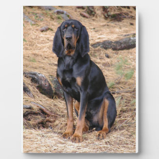 Black and Tan Coonhound Dog Photo Plaques