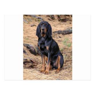 Black and Tan Coonhound Dog Postcard
