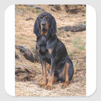 Black and Tan Coonhound Dog Square Sticker