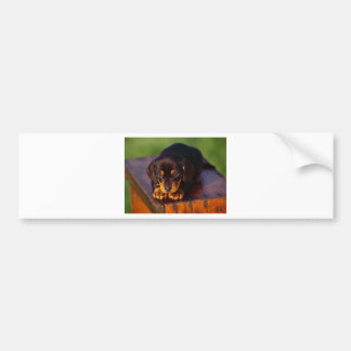 Black And Tan Coonhound Puppy Bumper Sticker