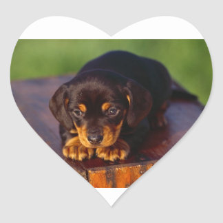 Black And Tan Coonhound Puppy Heart Sticker