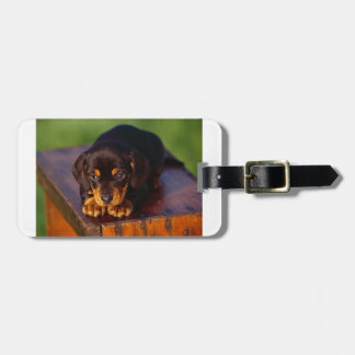 Black And Tan Coonhound Puppy Luggage Tag