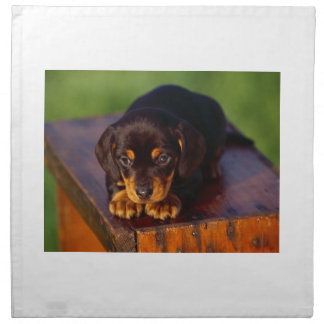 Black And Tan Coonhound Puppy Napkin