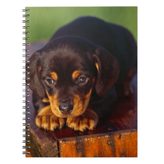Black And Tan Coonhound Puppy Notebook