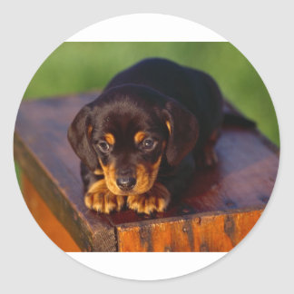 Black And Tan Coonhound Puppy Round Sticker