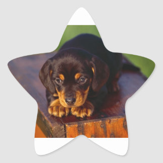 Black And Tan Coonhound Puppy Star Sticker