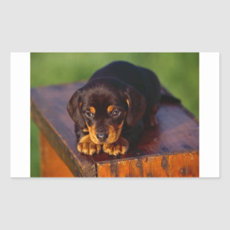 Black And Tan Coonhound Puppy Sticker