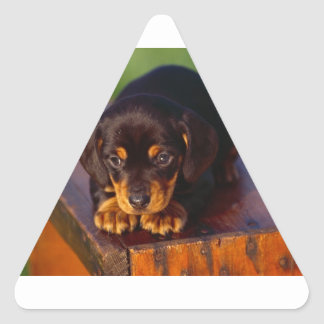 Black And Tan Coonhound Puppy Triangle Sticker