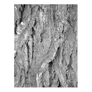 Black and White Aged Bark Postcard