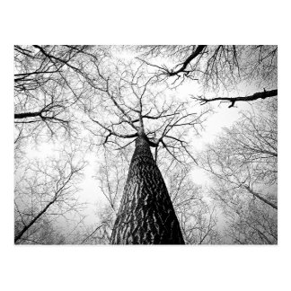 Black and White Autumn Tree Forest Photography Postcard