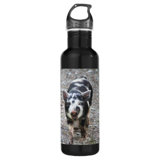 Black and White Baby Pig 710 Ml Water Bottle
