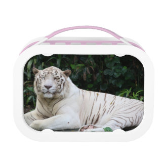 Black and White Bengal Tiger relaxed and smiling Lunchbox