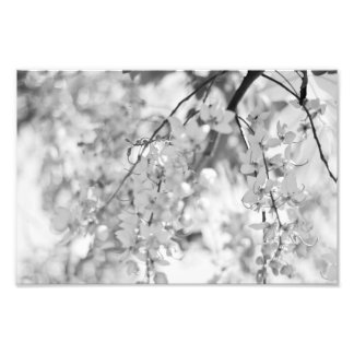 Black and White Blossom Branch Photo