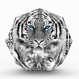 Black And White Blue Eyes wild Tiger face