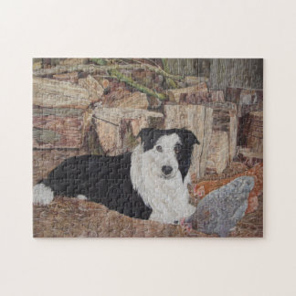 black and white border collie dog chickens picture jigsaw puzzle