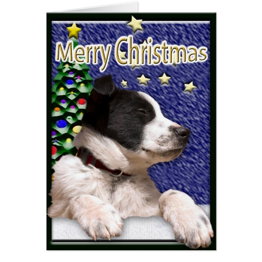 Black and White Border Collie Puppy Card